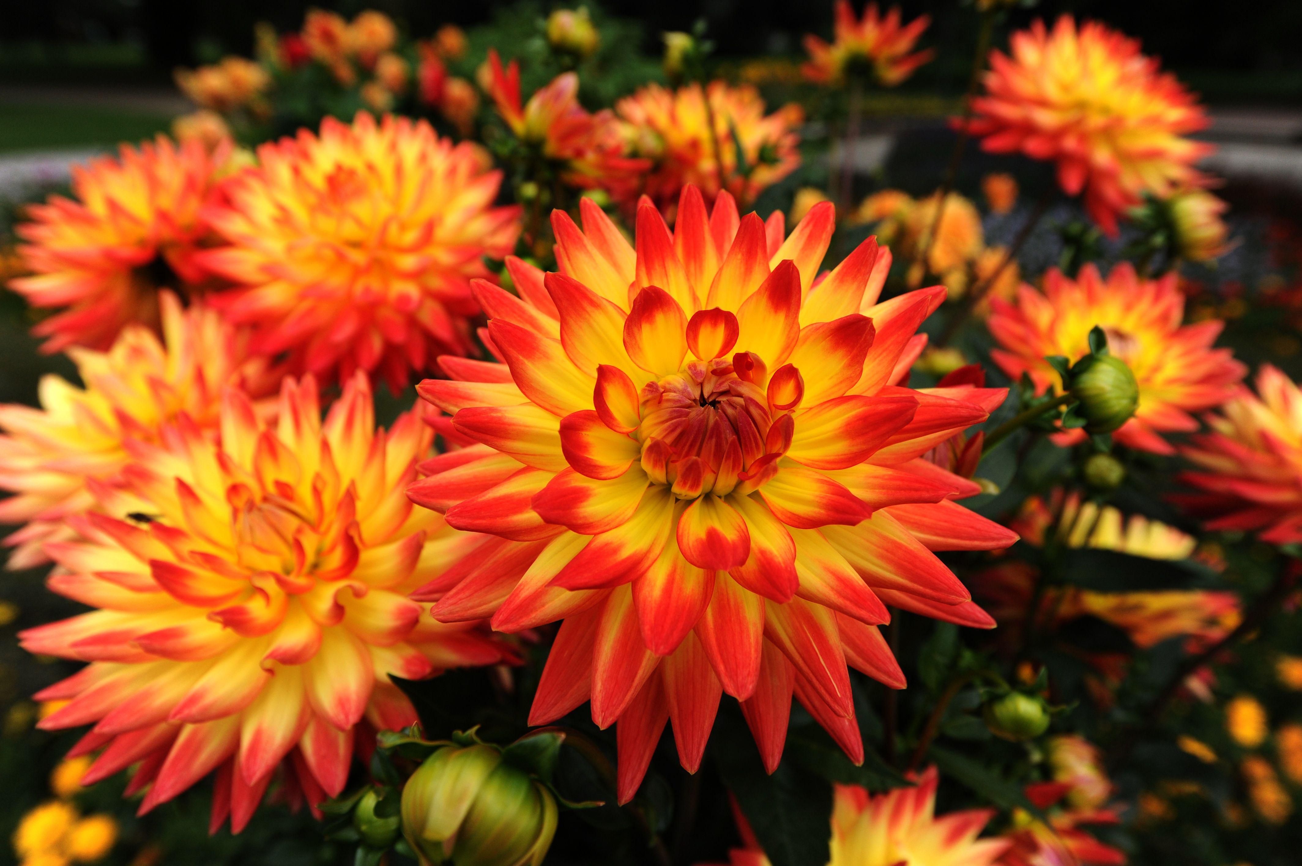 Common Types Of Garden Flowers