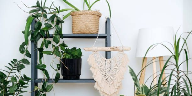 How To Keep Plants Alive While Away, How To Care For Houseplants While On Vacation