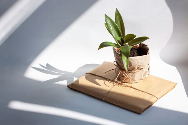 urban jungle gardening concept houseplant tradescantia pot wrapped in kraft paper with package arrangement at window in living room, natural sunlight shadows interior design, styling green plants