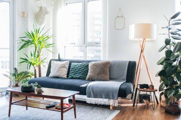 15 Best Living Room Plants Living Room Indoor Plants To Buy Now