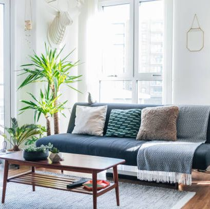 15 Best Living Room Plants Living Room Indoor Plants To Buy Now