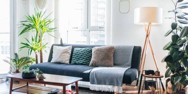 Living Room Indoor Plants To Now, Living Room Plants