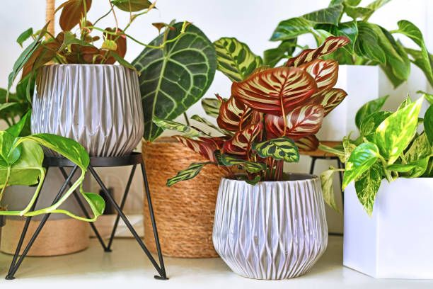 various different trendy tropical house plants in flower pots arranged on shelf