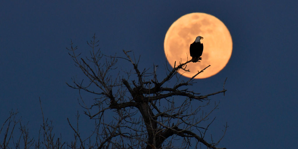 15 Stunning Photos of Last Night's Super Pink Moon—the Biggest and Brightest of the Year