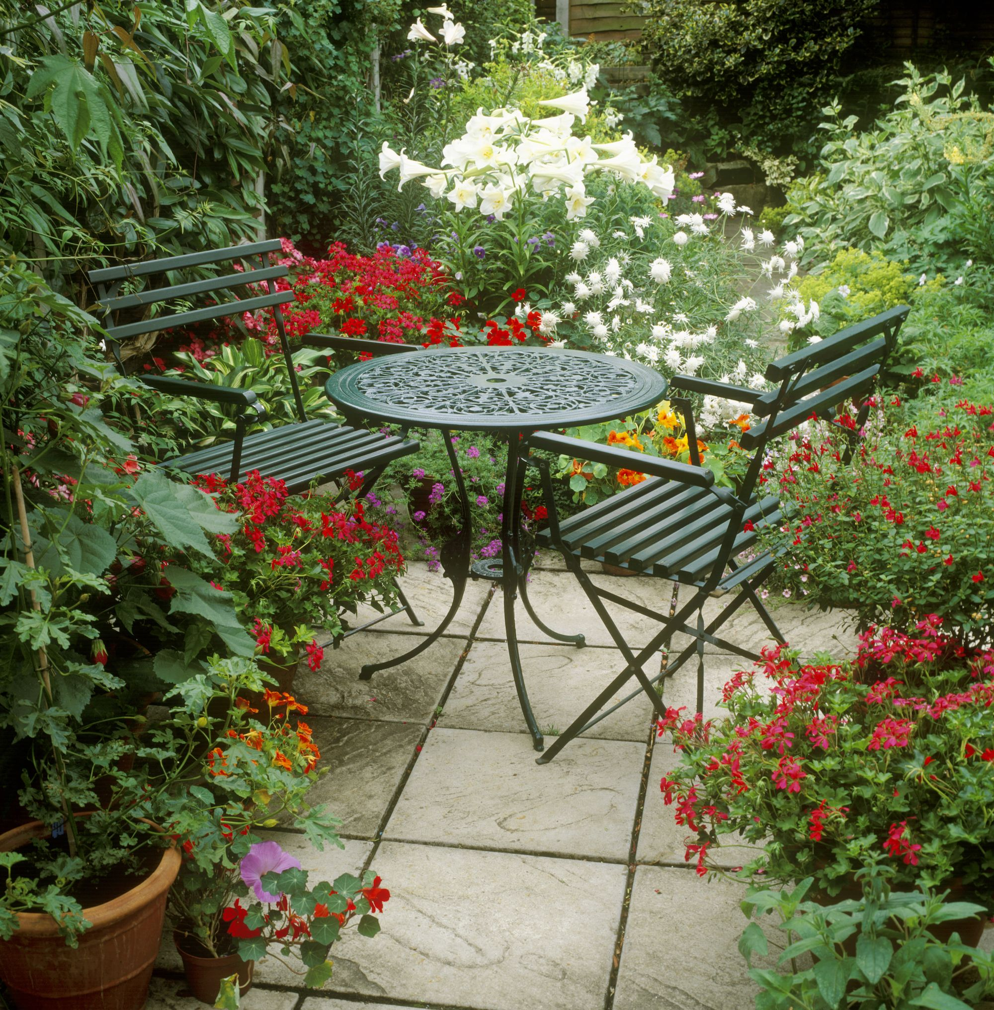 20 Best Patio Plants Lush Plants For Decks And Patios