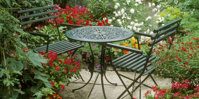 20 Best Patio Plants Lush For, What Plants Are Good For Patio Planters