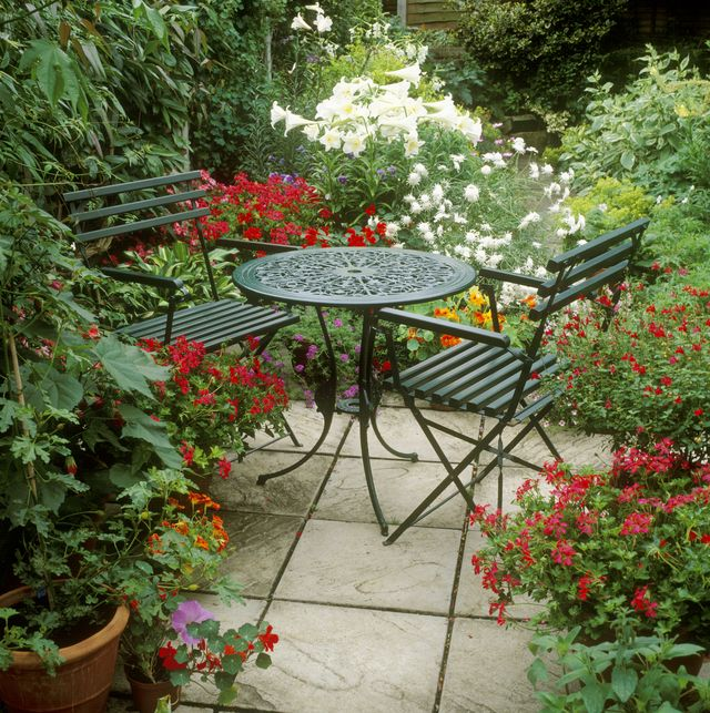 20 Best Patio Plants Lush For, Best Large Potted Plants For Patio