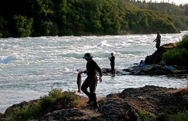 iliamna, alaska   july 23, 2019 anglers fish for sockeye salmon along the rapids of the newwhalen river near iliamna local residents say their entire ecosystem revolves around sockeye salmon, which nourish people, animals and plant life all along the headwaters and tributaries of bristol bay they fear that tailings from the proposed pebble mine could pollute the environment the proposed mine site is said to contain 55 billion pounds of copper, 33 billion pounds of molybdenum, and 67 million ounces of gold meantime, sockeye salmon comprise the largest wild salmon run in the world and are vital to the native way of life as well as the local economy luis sincolos angeles times via getty images