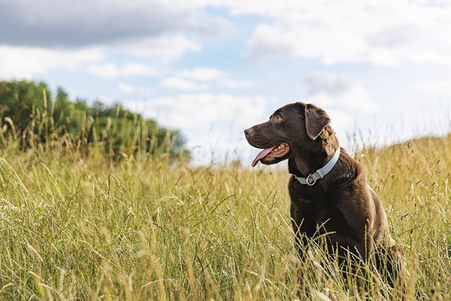 how to care for our pets after we die