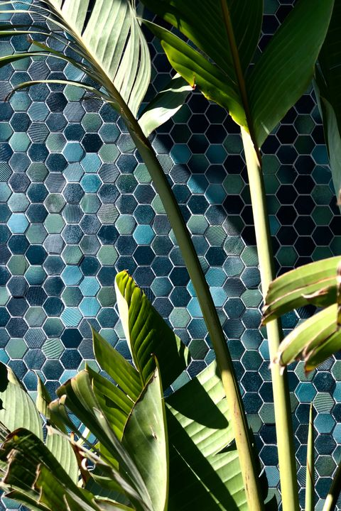 a detail photo of a mosaic tile and palm leaves