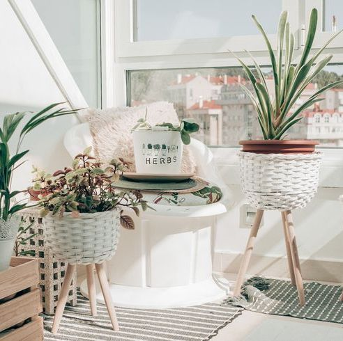 houseplants near the window stil at home in white pots