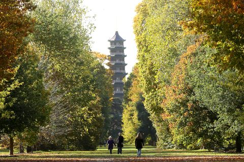 richmond, england   october 15 the iconic 1762 great pagoda in the royal botanic gardens, kew,  rises above the autumn leaves at the royal botanic gardens on october 15, 2020 in richmond, england photo by chris jacksongetty images