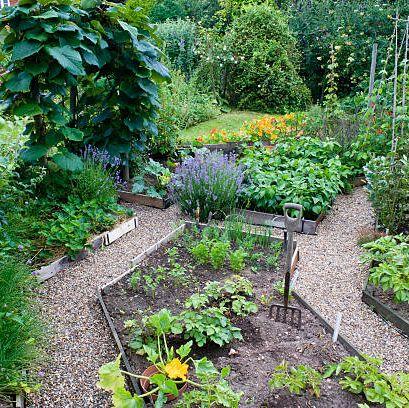 garden in full bloom with vegetables