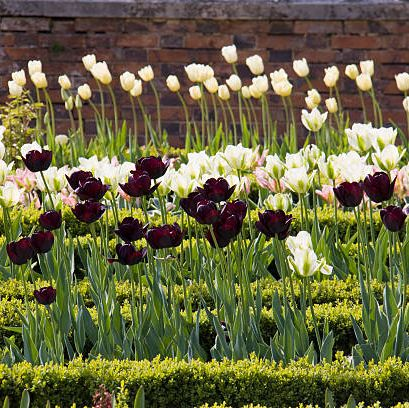 33 Best Bulbs To Plant In Fall For Spring Flowers
