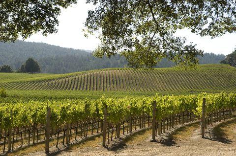 Agriculture, Plantation, Field, Plant community, Farm, Land lot, Rural area, Crop, Cash crop, Vineyard,