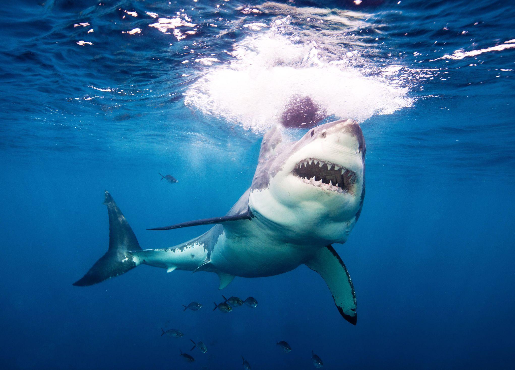 Il video da urlo di uno squalo che attacca un surfista, che lo prende a pugni