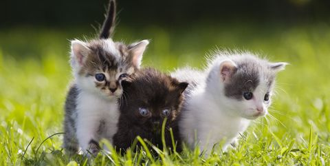 15 reasons why cats make the best pets facts about cats