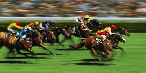 Jockey, Sport venue, Flat racing, Race track, Animal sports, Bridle, Equestrian sport, Horse tack, Halter, Racing,
