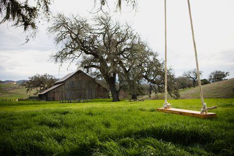 Tree, Grass, Natural landscape, Rural area, Land lot, Farm, Grassland, House, Barn, Pasture,