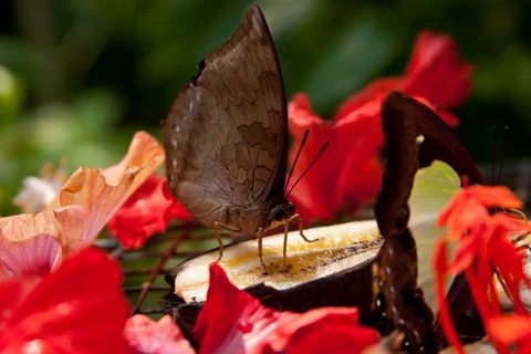 Butterfly, Red, Insect, Flower, Leaf, Moths and butterflies, Plant, Petal, Pollinator, Botany,