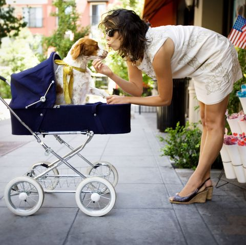 Dog sitting in a pram bring kissed by woman