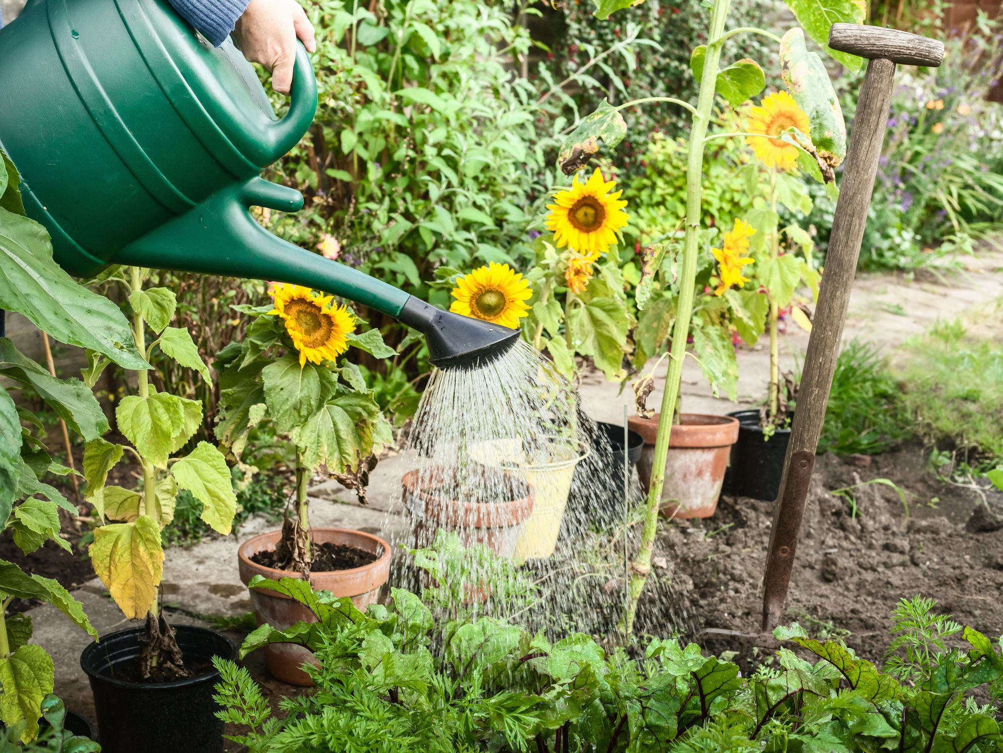 The one thing you should do in your garden ahead of Brexit, according to Gardeners' World presenter Carol Klein
