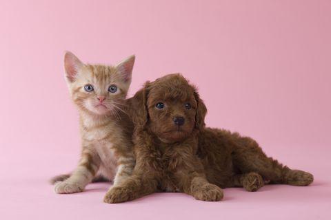 Cani E Gatti La Ricerca Svela Chi è Il Più Intelligente