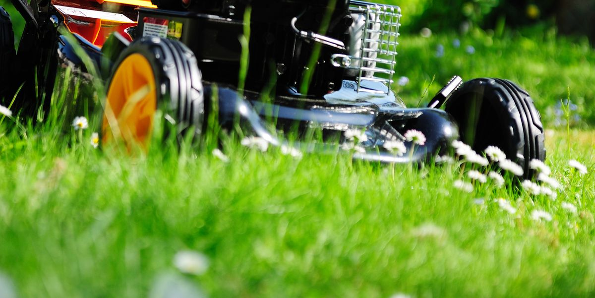5 lawn-mowing tips to help give garden wildlife the best chance possible