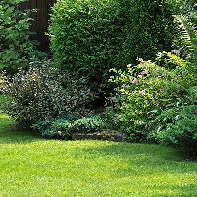 green lawn and ornamental trees