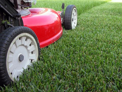 10 lawn care tips smart tips for a healthy lawn