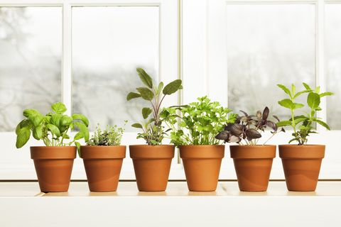 How To Grow Indoor Herb Garden