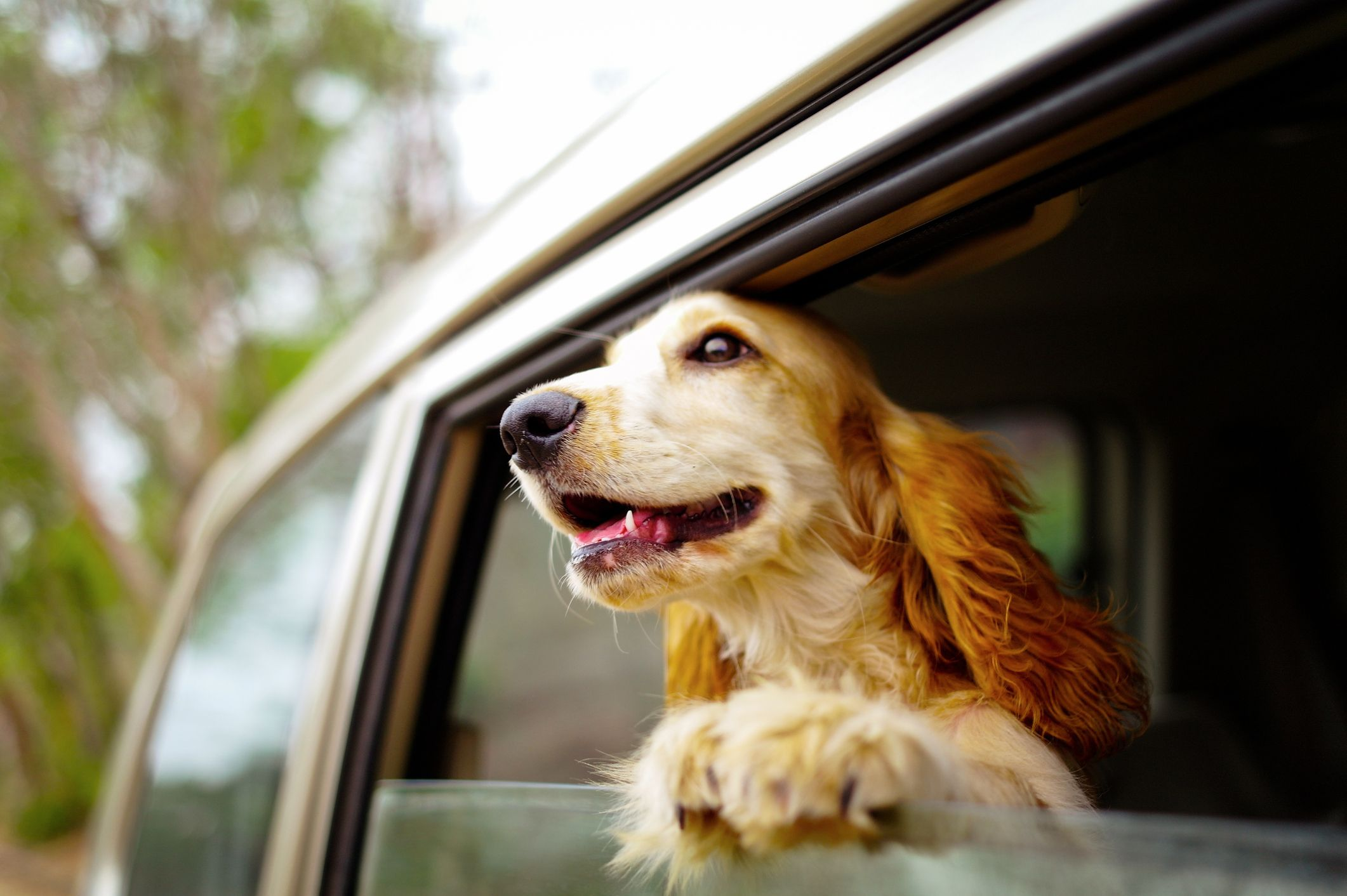The Most Dog-Friendly Road Trips in America