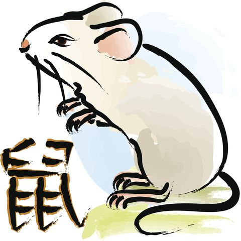 Clip art, Rat, Coloring book, Flightless bird, Rodent, Mouse, Tail, Whiskers, Graphics, Gerbil,