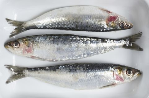 Vertebrate, White, Fish, Fish, Grey, Silver, Fin, Marine biology, Oily fish, Ray-finned fish,