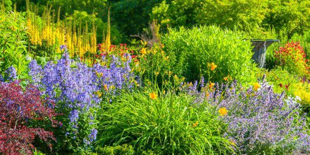 25 Best Perennial Flowers - Ideas for Easy Perennial Flowering Plants