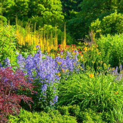Flower Garden Plant