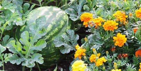 Shade Vegetable Garden Layout