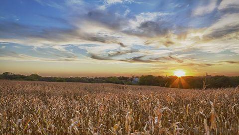 Sky, Field, Nature, Natural landscape, Barley, Rye, Grain, Cloud, Crop, Prairie,