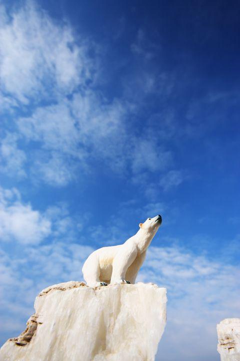 Sky, Blue, Sculpture, Cloud, Statue, Art, Stock photography, Monument, Ice, Polar bear,