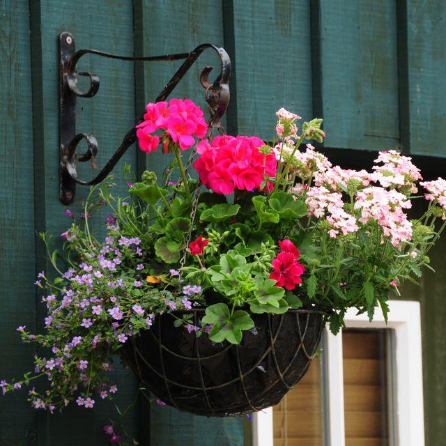 10 Best Hanging Plants for 2019 - Best Plants for Hanging Baskets