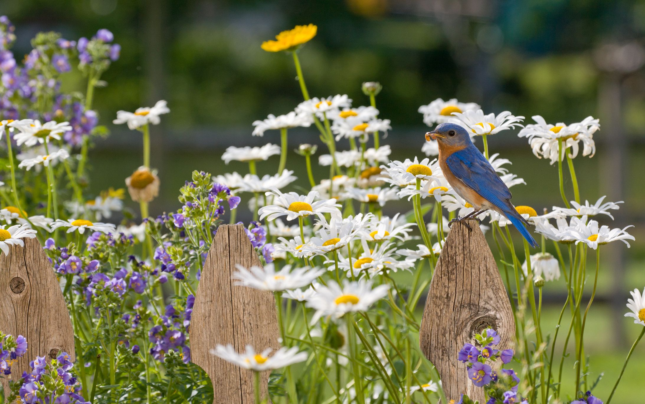 """Here's Why You Should Be """"Birdscaping"""" in Your Yard With Berried Plants"""