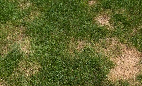 Grass, Lawn, Green, Plant, Grass family, Grassland, Groundcover, Soil, Fodder, Meadow,