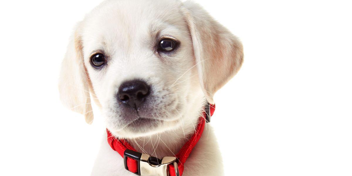 15 Top Preppy Dog Collars Best Designer Collars For