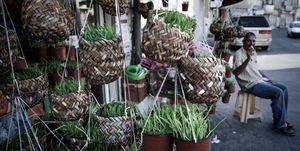 houseplants for sale
