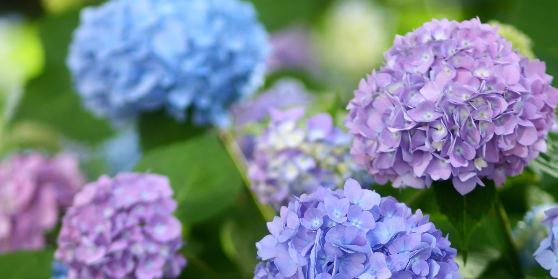 These 13 Plants Are Deadly — Do You Have Them at Home?