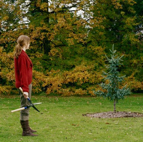 Tree, Lawn, Grass, Leaf, Woody plant, Plant, Play, Garden, Autumn, Park,