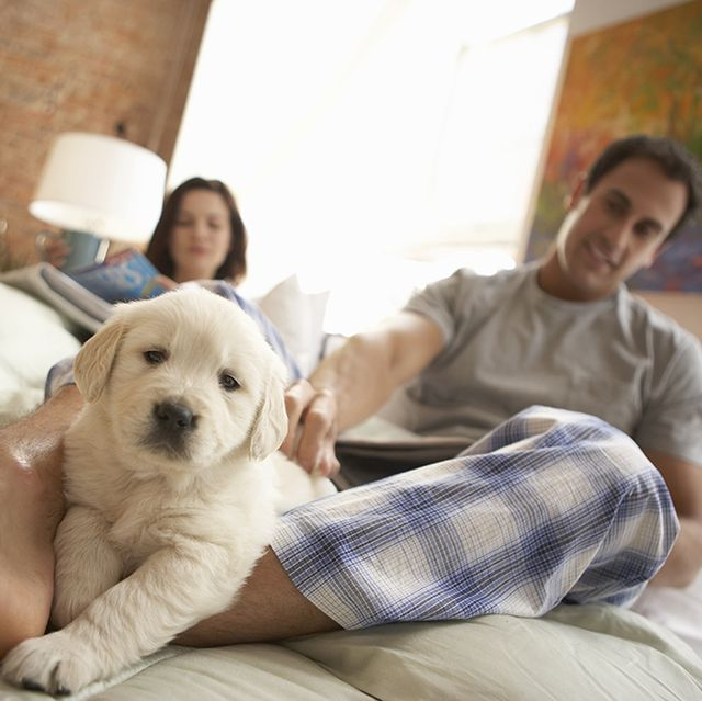 Couple relaxing on bed with dog