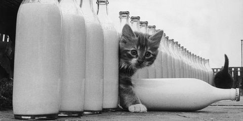 White, Cat, Black-and-white, Milk, Bottle, Drink, Dairy, Felidae, Photography, Small to medium-sized cats,