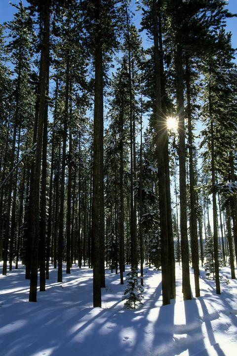 USA, Montana, Near West Yellowstone, Gallatin-targhee