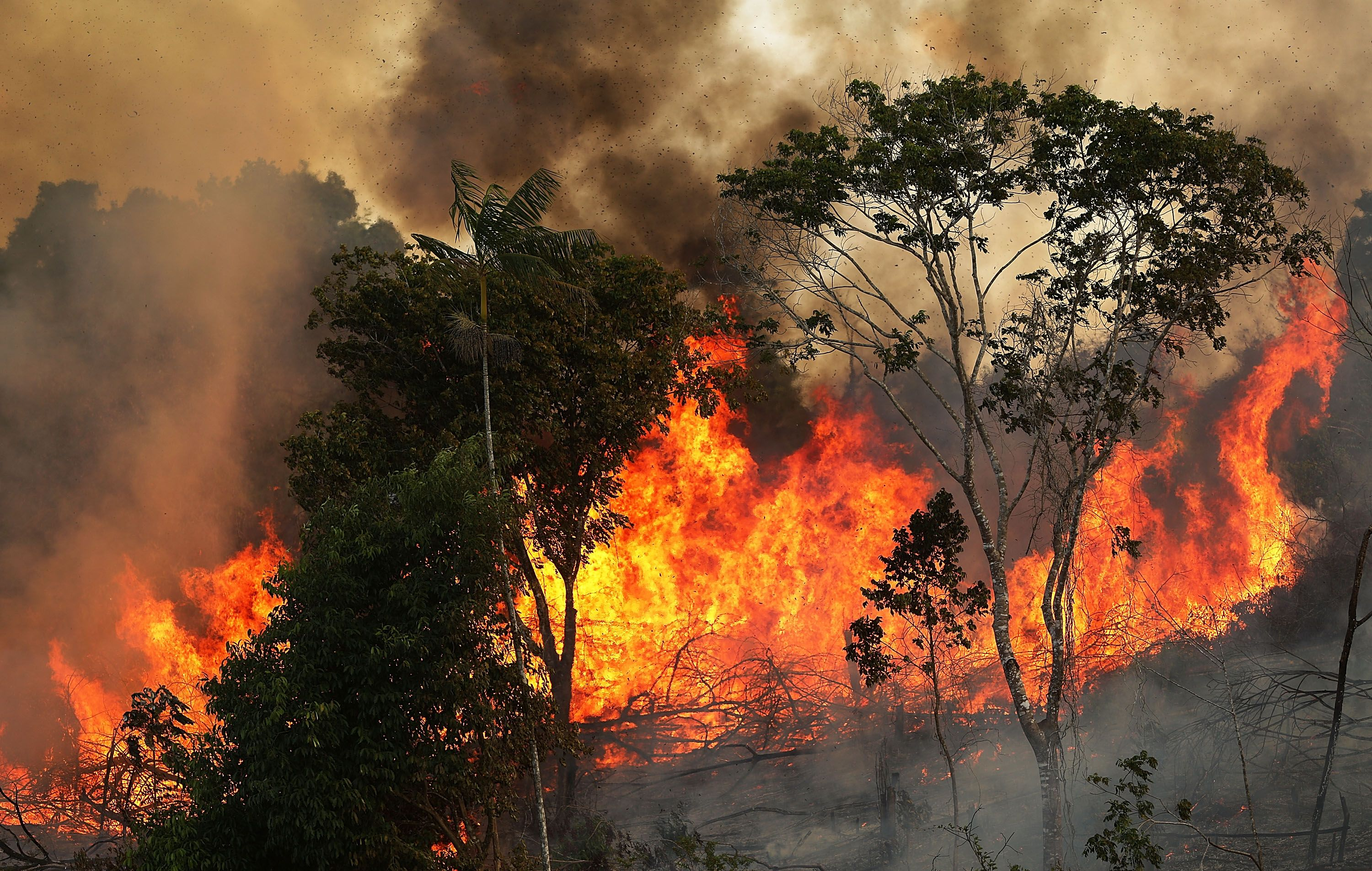 Celebrities Are Speaking Out in Response to Brazil's Amazon Rainforest Fires
